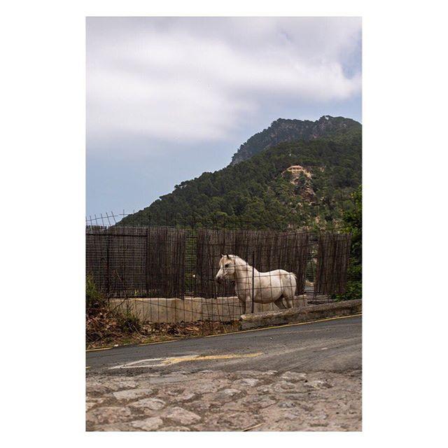 banyalbulfar somewheremagazine oftheafternoon landscape travel white subjectivelyobjective documentaryphotography yetmagazine landscapephotography broadmagazine horse mallorca