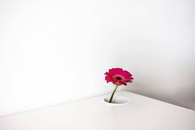 photooftheday madeinromania artistic inspiration photographer minimalism ig_romania flower pics lines instadaily aboutme pink surreal personal interiordesign corner