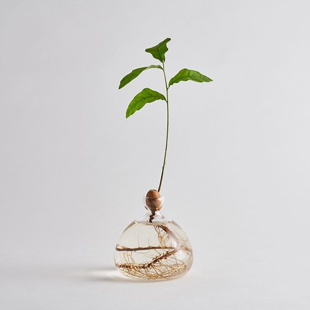 makers studiolife glassware oaktree craft homedecor giftguide