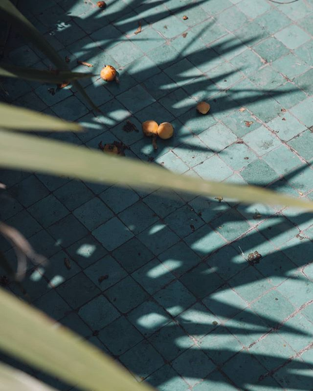 contemporaryphotography photodaily blue photooftheday art somewheremagazine photography palmtree shadow minimalzine photographie fruit fruits