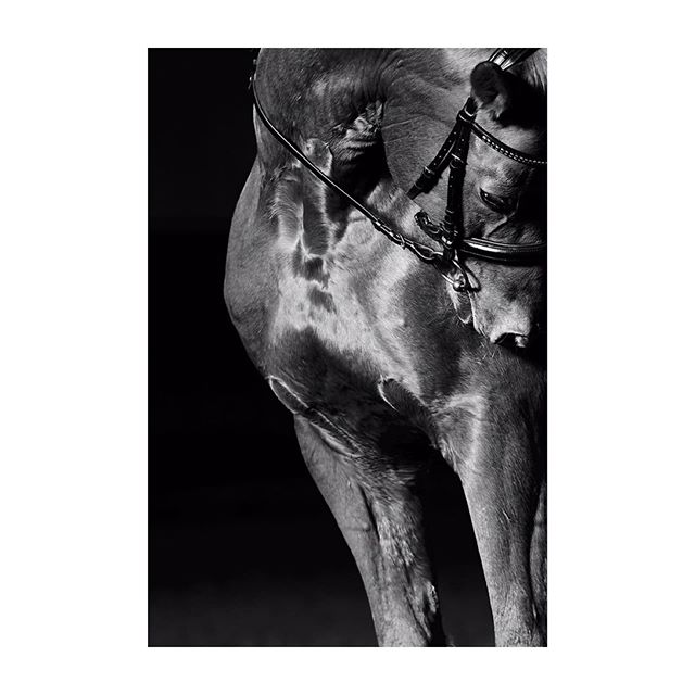 love equestrianlifestyle polo blackandwhite print art tilwagner equine portrait shooting gallery photography bridle work horse ralphlauren mood fashion equinesports dressage passion longines sports fineart fei lifestyle