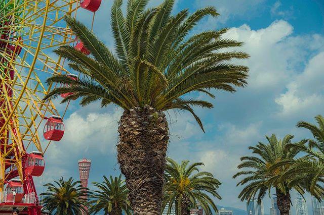 clouds photooftheday palmtrees style beauty vsco relax modelphotography travelgram beautiful theglobewanderer street lookslikefilm streetstyle modelling instalike wanderlust vscotravel workandfun kobe instadaily journey neverstopexploring wheel filterra instatravel japan